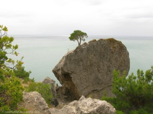 Дерево, що росте на каменючкє