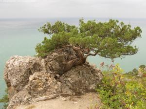 Ще одне дерево, що виросло з камню