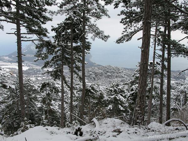 Вид на море з кримськими соснами