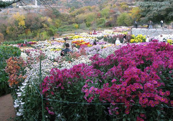 Нікітський сад - Бал хризантем