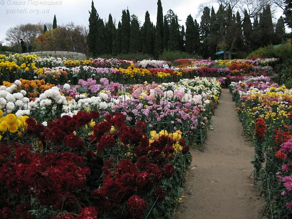 Бал хризантем  Нікітський сад